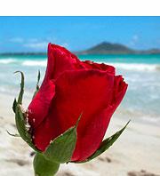 美しい地球のためにハワイができること